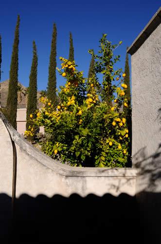 Tucson Italia