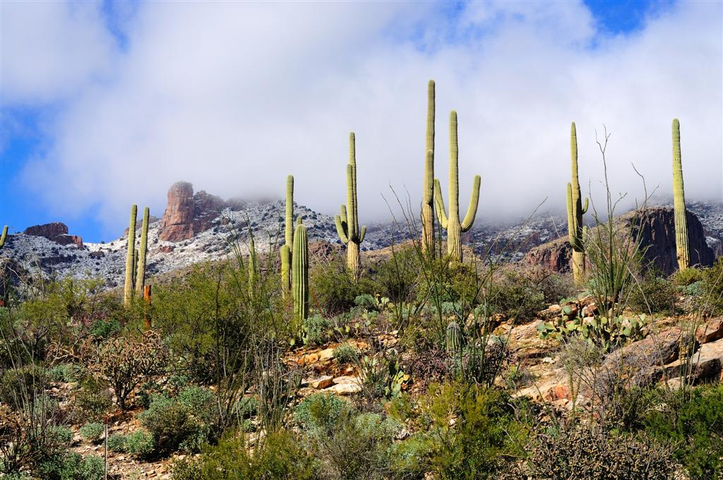 The Seasons of Real Estate in Tucson